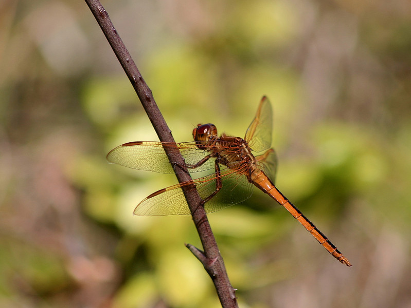The Standard Dragonfly Pose