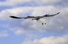 Seagull Flight_ JU8S2894