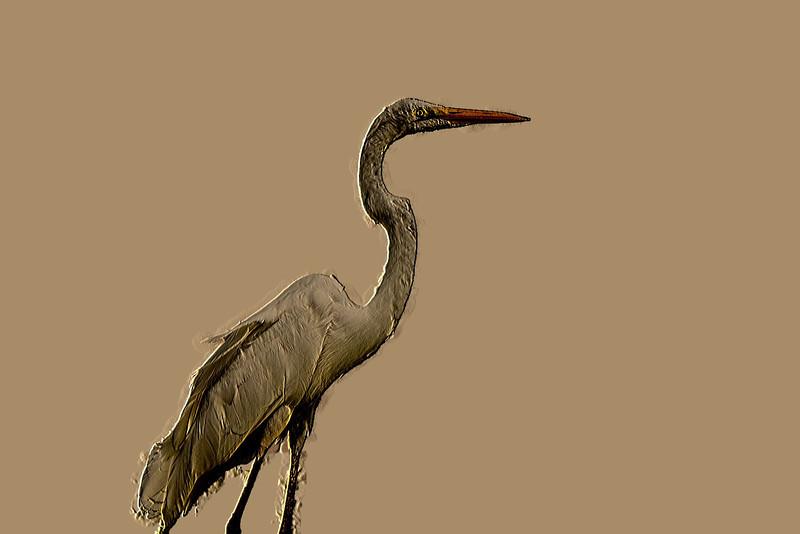 Single Crane 00_MG_5658