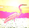 Pink Crane 00_MG_5660