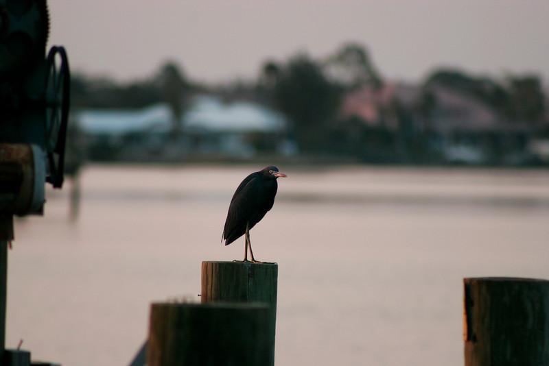 Sunset Bird on Dock_2676