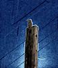 Woodpecker 03_MG_5685
