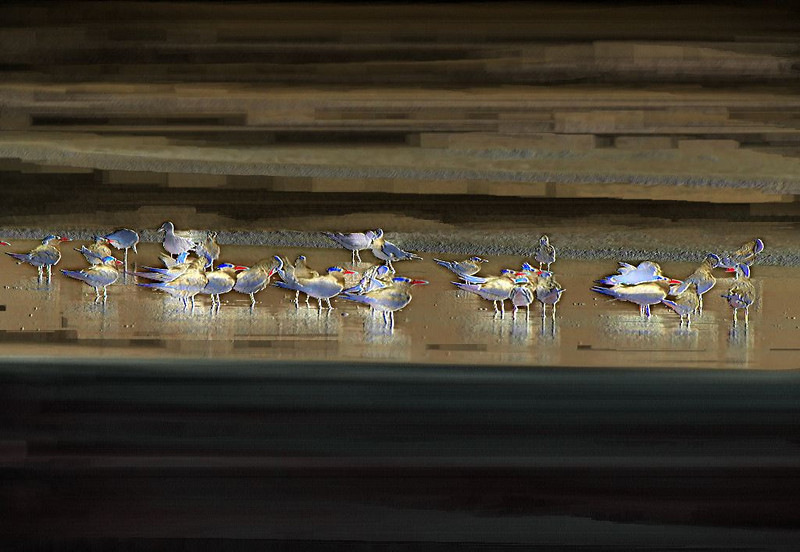 Flock O Gulls 08 _MG_1839
