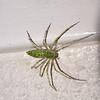 (105) Spider
