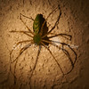 (106) Spider