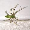 (112) Spider