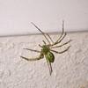 (102) Spider