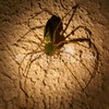 (107) Spider