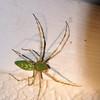 (108) Spider