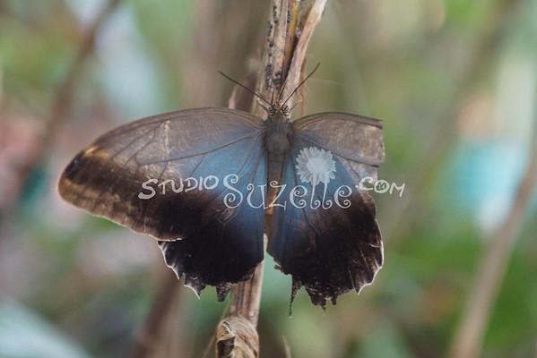 Various Butterfies