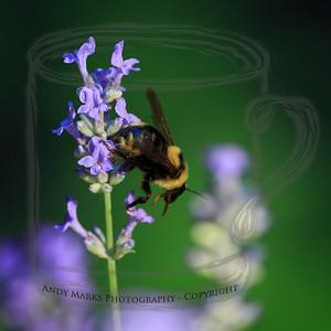 Little pollen: it has a nectar tank..