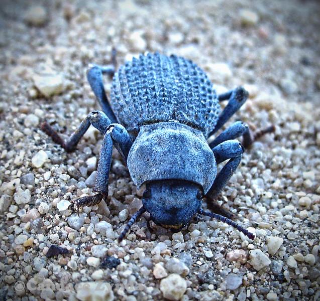 Bug photography; nature photography; candace zynda photographer; photographer chicago
