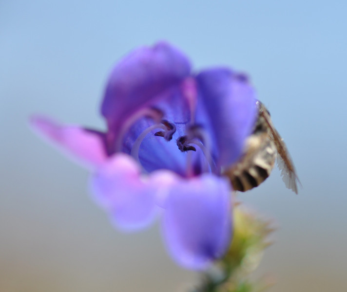 A bee landed on the flower as I was looking at the flower through the LCD screen.  Quite a surprise!