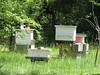 Beehives, Georgia (2)