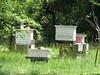Beehives, Georgia (2)