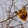 Exposed honeycomb - Skaneateles,NY