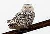 owl-3128