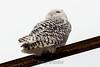 owl-3112