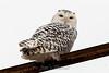 owl-3142