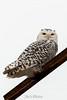 owl-3103-2