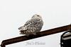 owl-3110