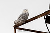 owl-3068