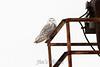 owl-3063