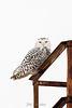 owl-3063-2