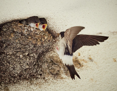 House martins - feeding