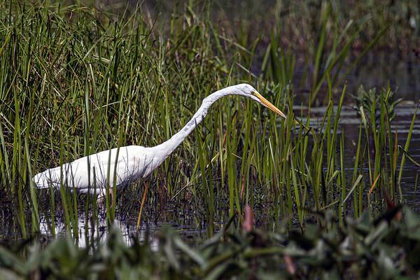 Burrage Pond