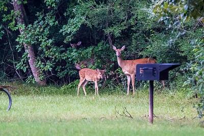 Burroughs Park post Harvey 8-31-17