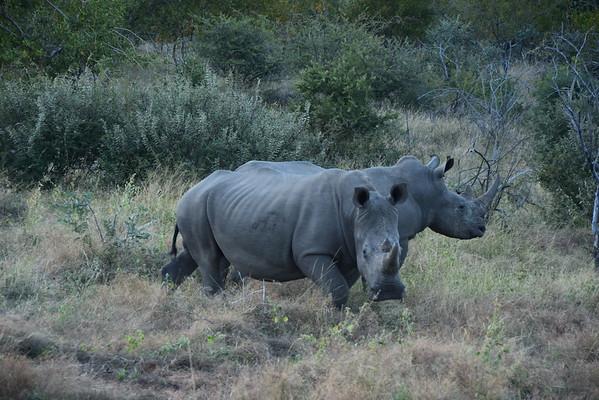 Rhino - Young Turks