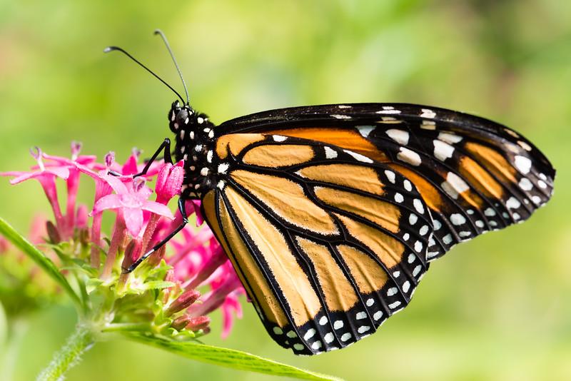 Butterfly_2k16_20160814_107_pp_kk1