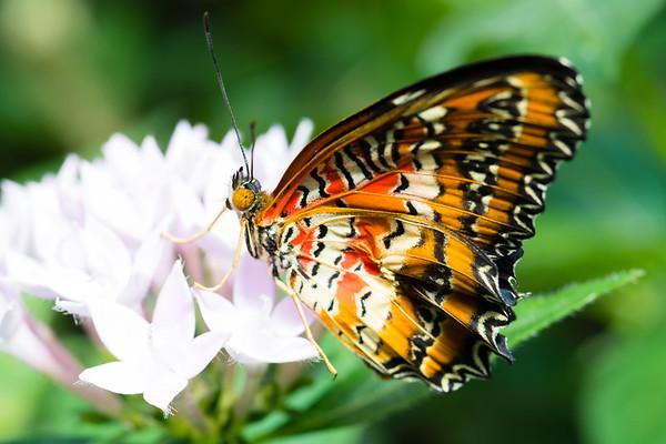 Butterfly2k17_20170520_070