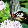 Butterfly2k17_20170520_133