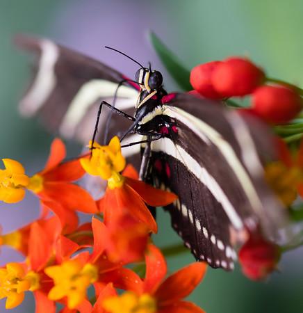 Butterfly2k17_2_20170603_038