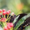 Butterfly_2k16_20160814_074_pp_kk1
