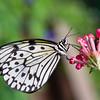 Butterfly2k17_20170520_113
