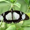 Butterfly_20150824_1535_090