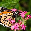 Butterfly_2k16_20160814_061_pp_kk1