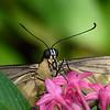 Butterfly_20150907_1528_173