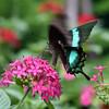 Butterfly_20150824_1536_092