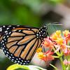 Butterfly_2k16_20160814_082_pp_kk1