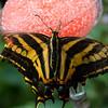 Butterfly2k17_20170520_076