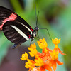 Butterfly2k17_S4_20170812_049