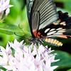 Butterfly2k17_20170520_129