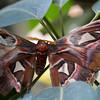 Butterfly2k17_20170520_090
