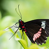Butterfly_20150824_1528_065_pp1