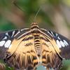 Butterfly2k17_20170520_104