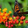 Butterfly2k17_S4_20170812_061